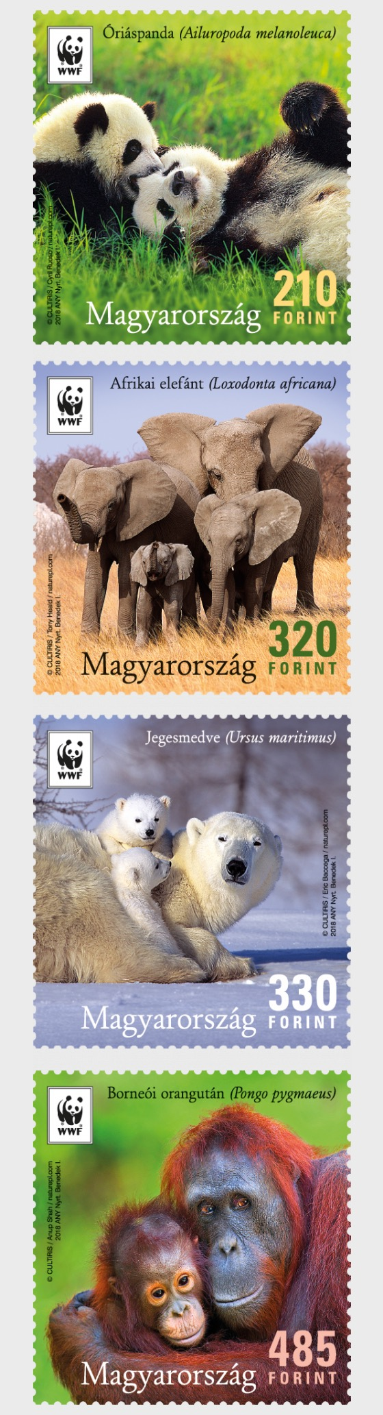 WWF Hungary - Earth's Iconic Animals - Set