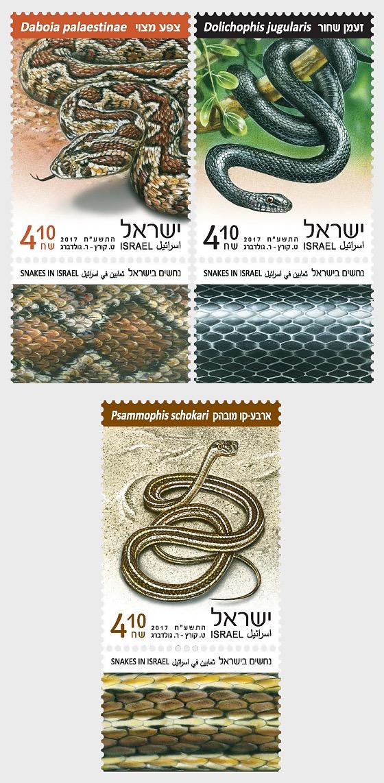 Snakes in Israel - Set