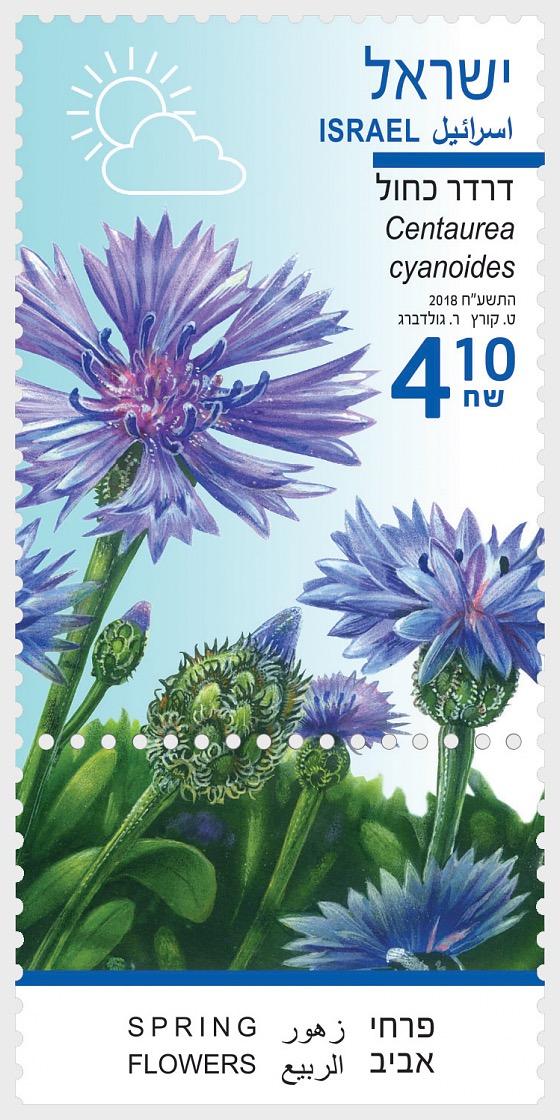 Spring Flowers - (Centaurea Cyanoides) - Set