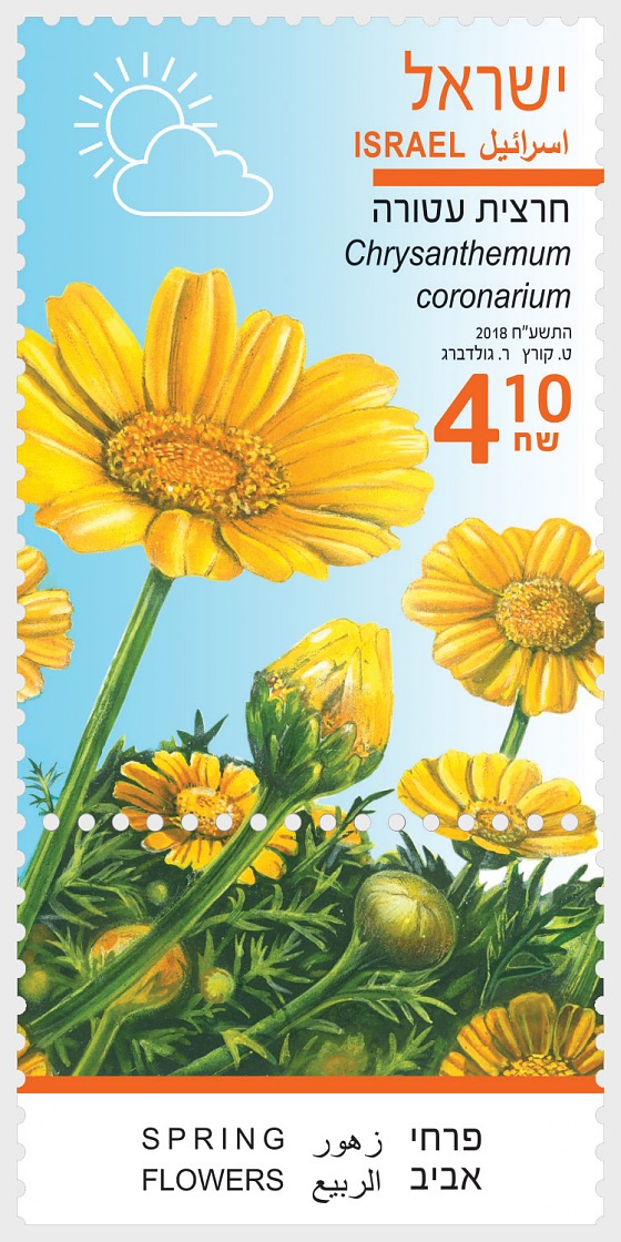 Spring Flowers - (Chrysanthemum Coronarium) - Set