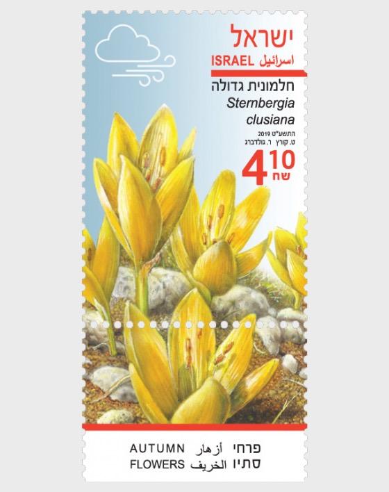 Autumn Flowers - Sternbergia Clusiana  - Set