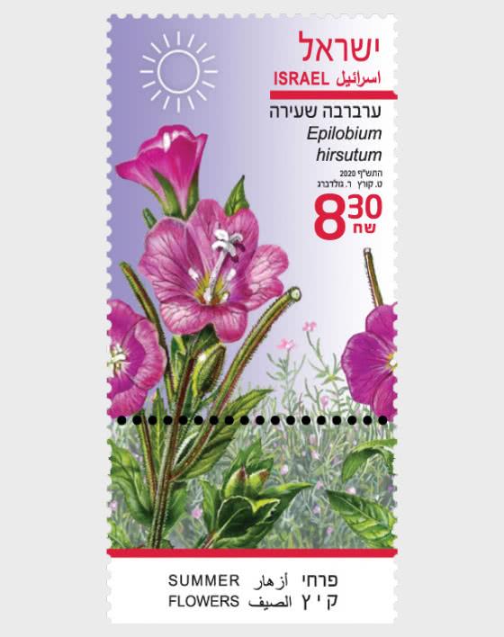 Summer Flowers - Epilobium Hirsutum - Set