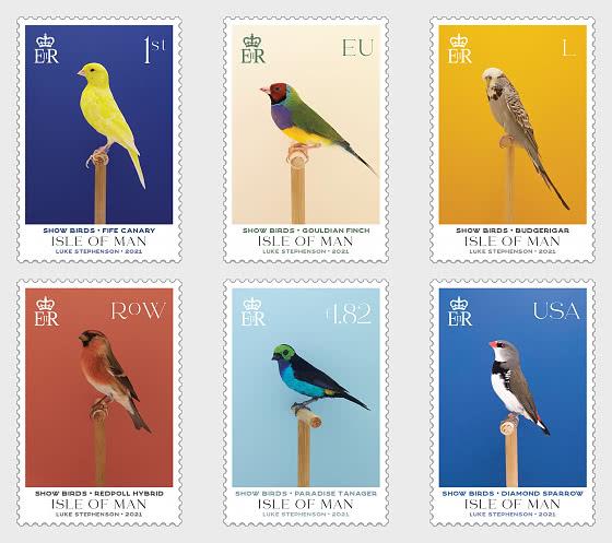 Show Birds - CTO - Set CTO