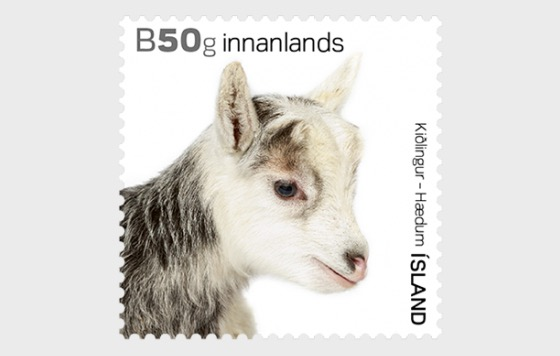 The Young of Iceland's Domestic Animals- (Kids) - Set