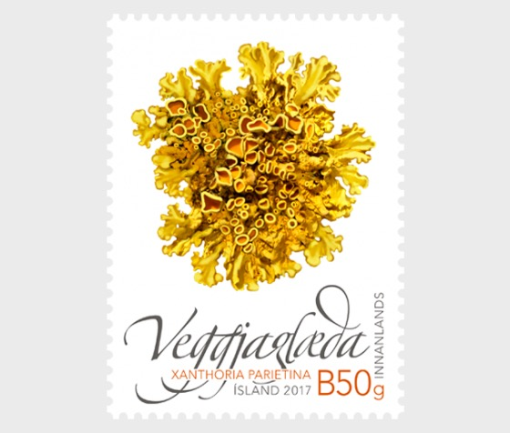 Wild Icelandic Vegetation II - (Common Orange Lichen) - Set