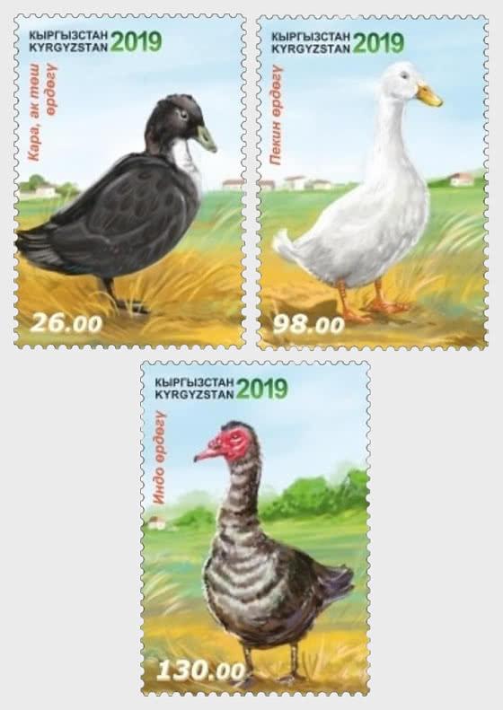 Poultry - Ducks - Set
