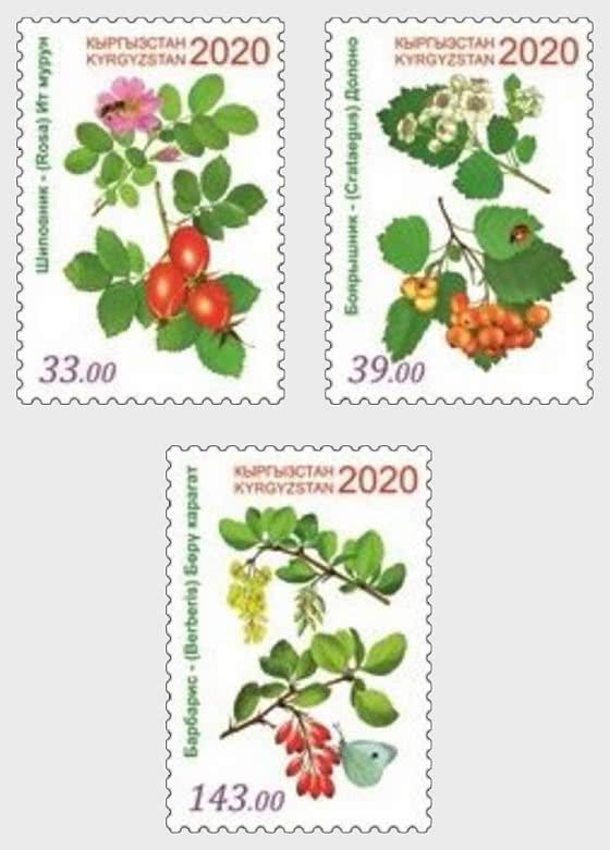 Plantas Medicinales de Kirguistán - Series