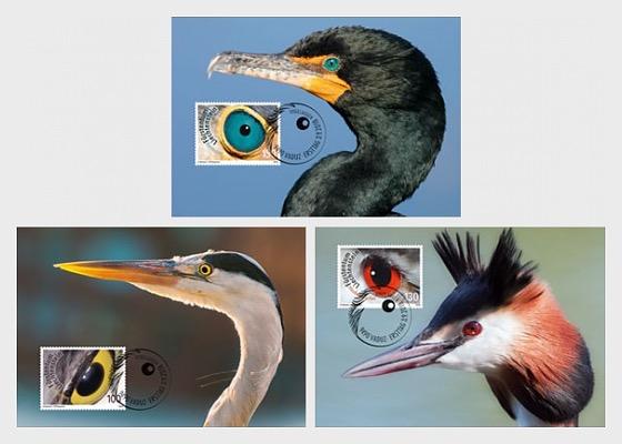 Artistic Photography - Birds Eyes - Maxi Cards