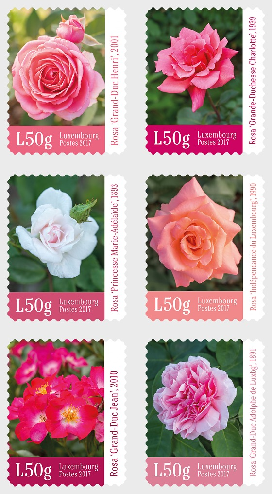 Roses - Set