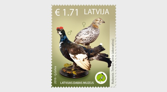 Latvian Natural History Museum of the unique exhibits - aberrant birds, 2016 - Set