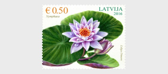 Flowers - Water lily - Set