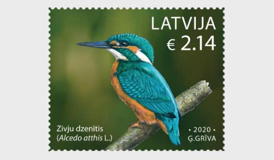 Birds - Common Kingfisher - Set