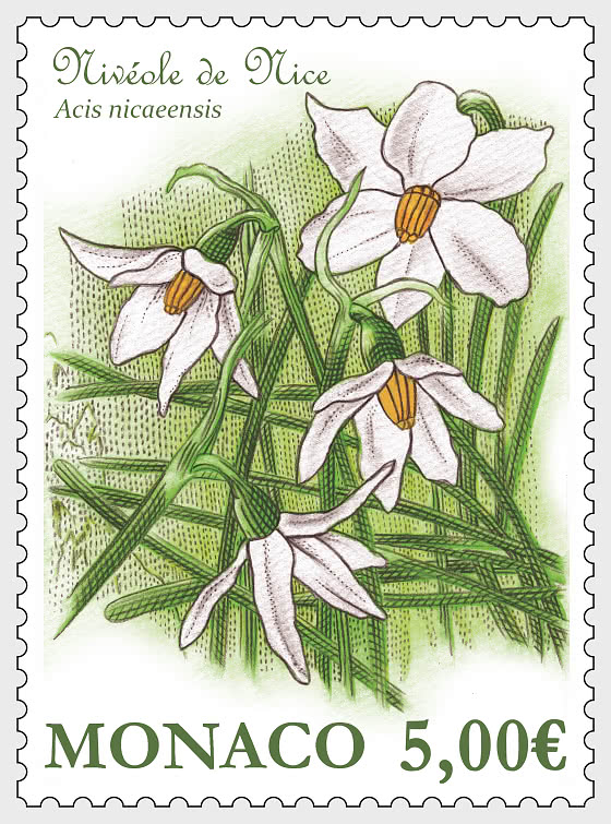 The French Snowflake (Acis Nicaeensis) - Mint - Set