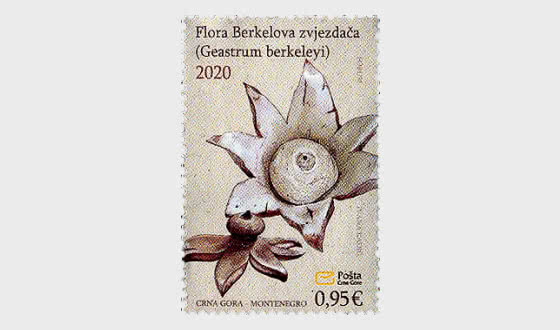 Flora - Berkeley's Earthstar - Series