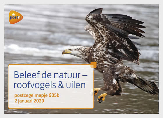 Experience Nature - Birds of Prey and Owls - Presentation Pack