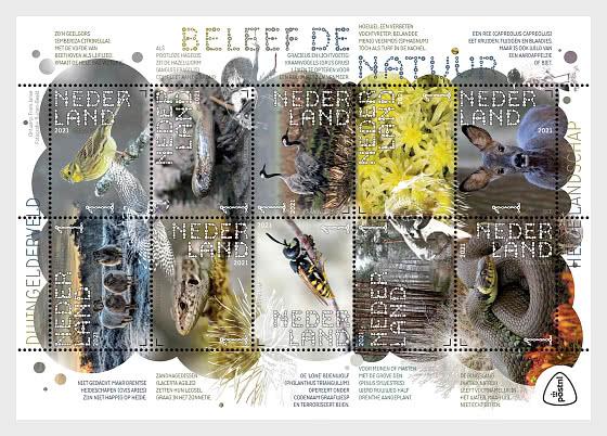 Experimente La Naturaleza - Dwingelderveld - Hojas Bloque