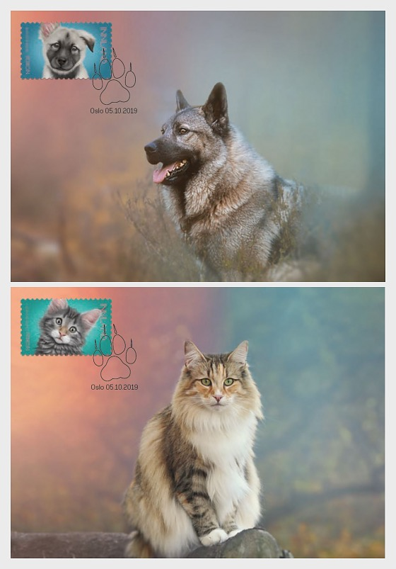 Kostbare Haustiere - Maximumkarten
