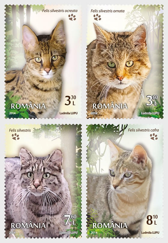 Wild Cats - Set