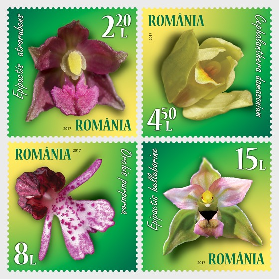 Wild Orchids - Set