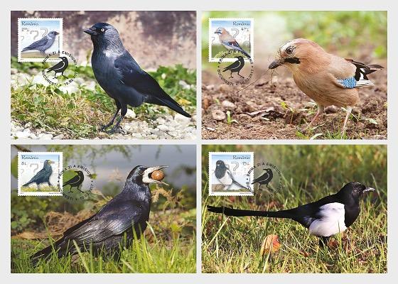 Intelligent Birds - Maxi Cards