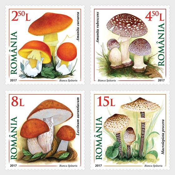 Mushrooms - Set