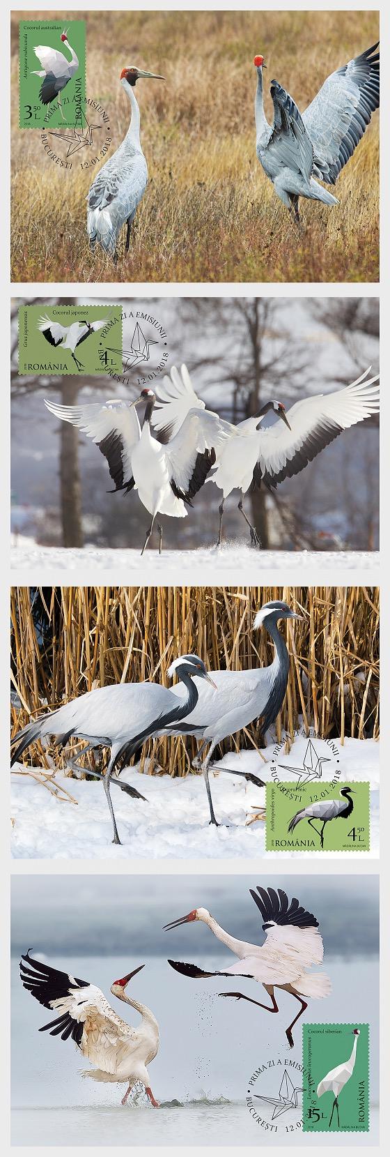 Migratory Birds - Cranes - Maxi Cards
