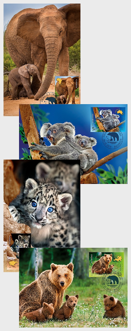 Wild Cubs - Maxi Cards
