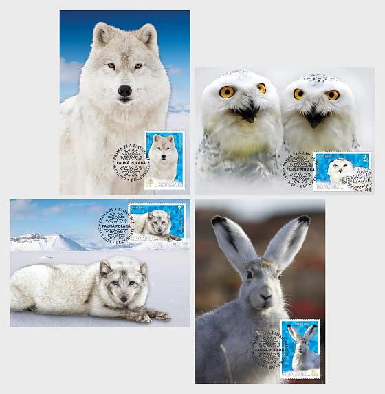 Polar - Fauna - Maxi Cards