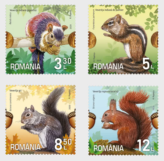 Squirrels - Set