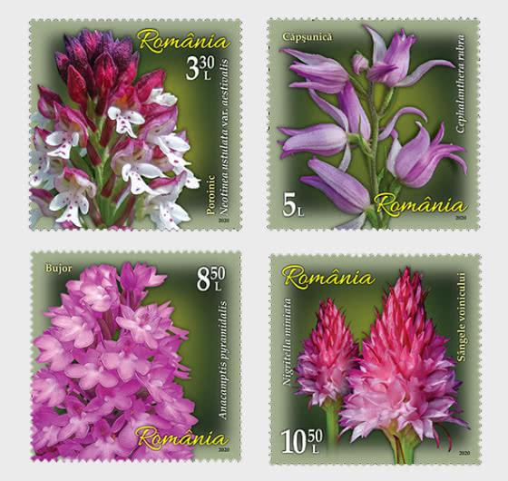 Orchids - Set