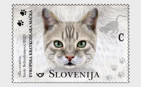 The Domestic Cat - European Shorthair - Set
